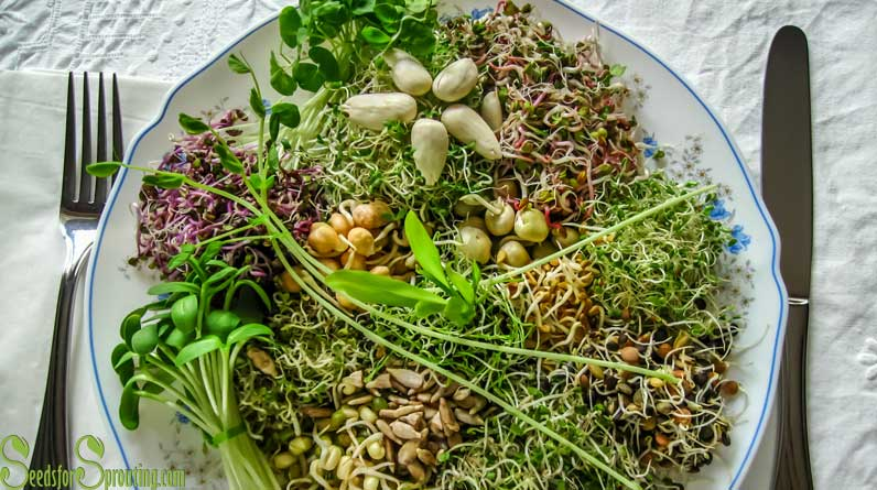 The Benefits of Sprouts – Why Sprouts